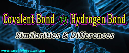 Difference between Covalent and Hydrogen Bond | easybiologyclass