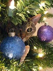 Maggie in the Christmas tree