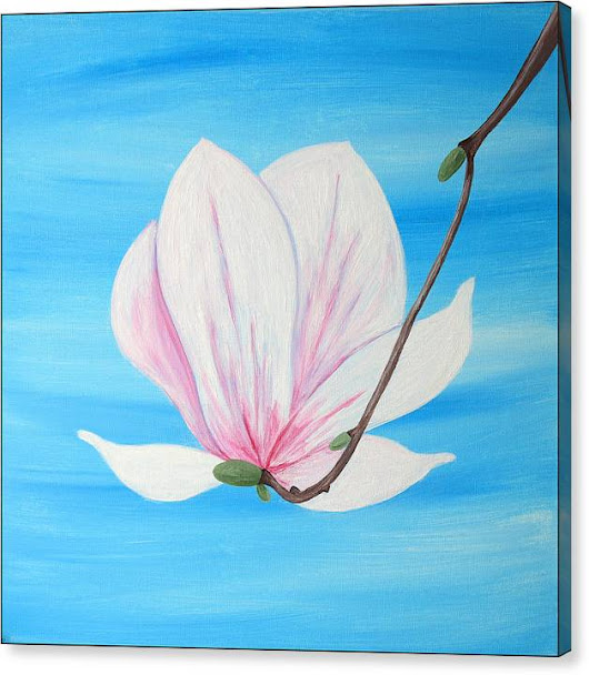 Limited Time Promotion: Delicate Magnolia Stretched Canvas Print