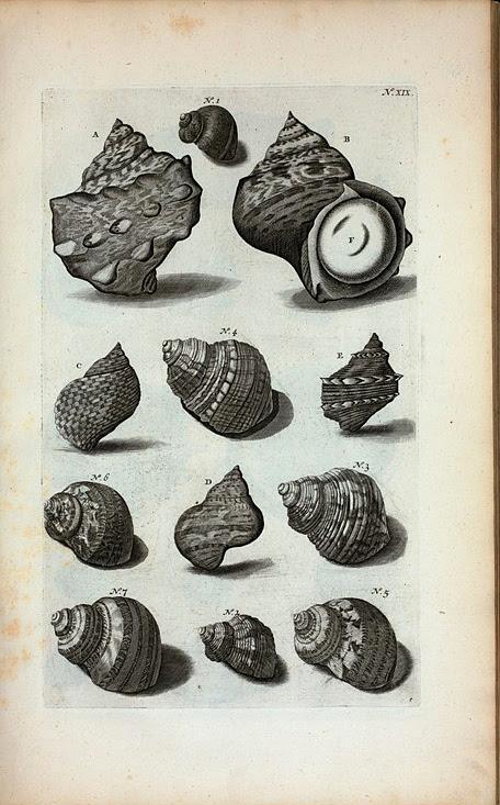 Cochlearum Species. A. B. Cochlea  Lunaris major: A. Supremam partem repræsentat; B. imam partem offert; F. est  operculum oris, Umbilicus veneris dictum; C. Cochlea sulcata nigra; D. Cochlea Petholata; Fig. 1. Hujus alia species; E. Cochlea Lunaris aspera; Fig. 2. Est alia species ejusdem;  Fig. 3. Cochlea Lunaris variegata; Fig. 4. Cochlea Lunaris viridis; Fig. 5, 6, 7. sunt diversæ species Literæ D.