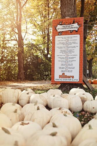 pumpkin patch 2013