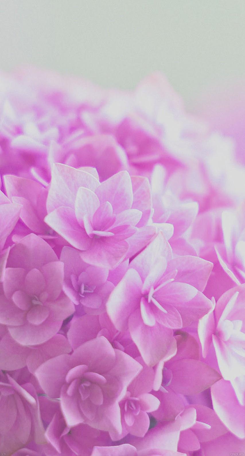 ピンク色の花 めちゃ人気 Iphone壁紙dj