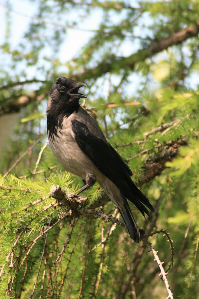 En liten pip pip i treet som fulgte med på oss under matingen av alle fuglene...