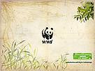 Papel de parede - quiz Mata Atlântica em Jogo - versão C - 1024x768 / ©: WWF-Brasil