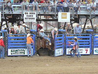 rodeo cheval.jpg