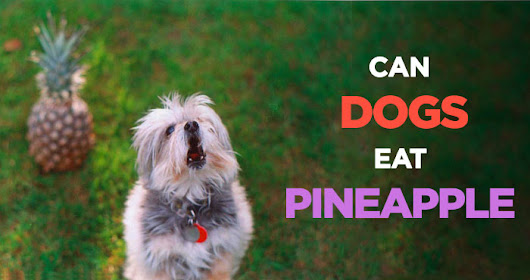 Can Dogs Eat Pineapple: A Healthy Treat Alternative for Your Pup