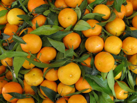 Oranges from the Island of Capri in Italy