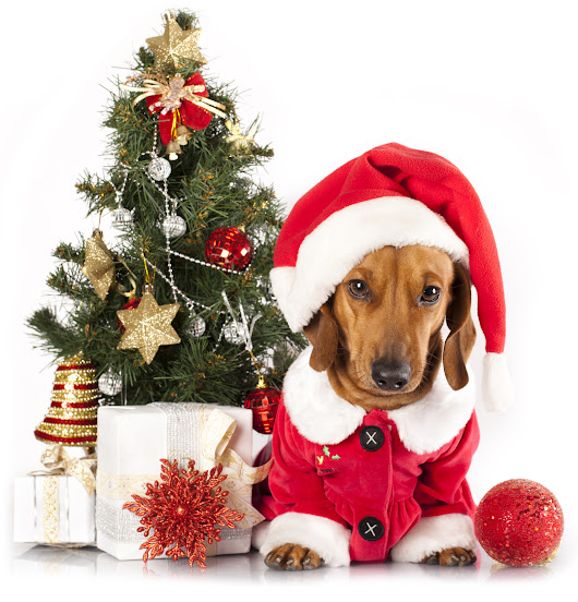 Winter and Holiday Toxins for Pets | Pet Poison Helpline
