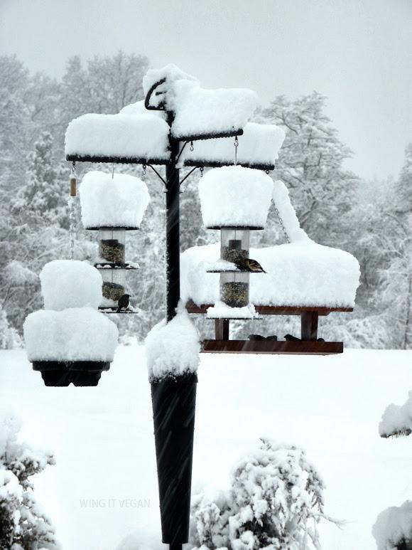 Snowy birds