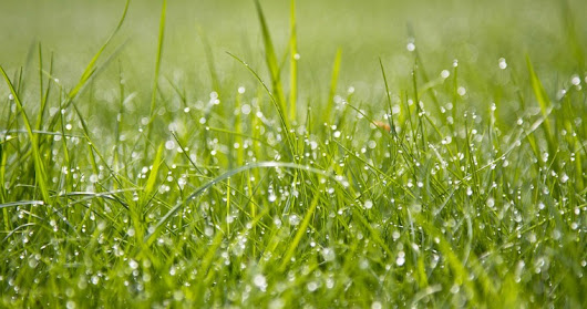 How to Protect Your Lawn From Ring Spot Disease | Woodsman Tree Service