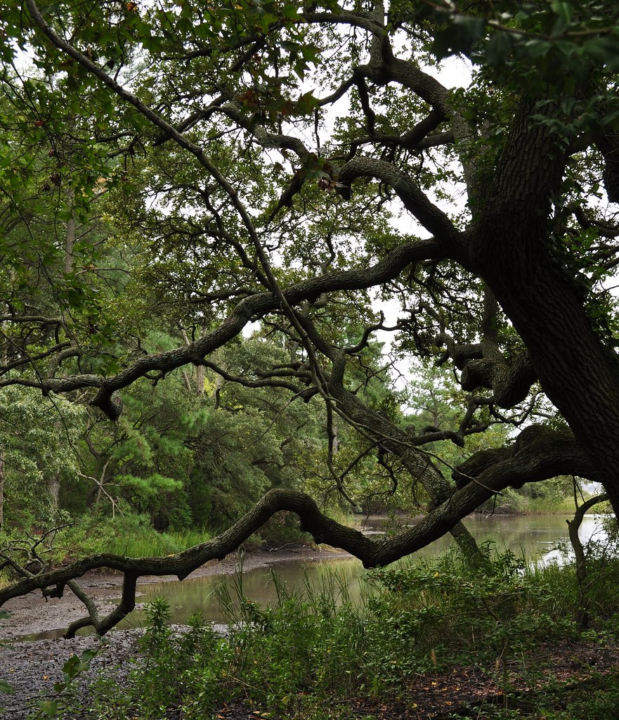 Live Oak By the Water 2