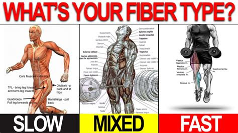 workout program  build muscle lose fat customized
