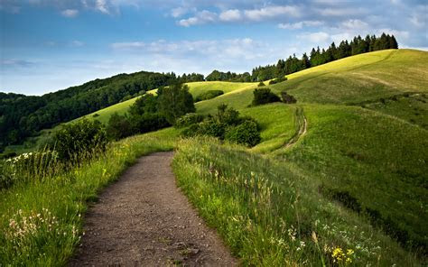 Path Green Fields Wallpapers   HD Wallpapers   ID #14274