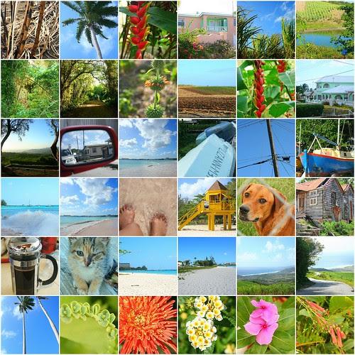 Barbados Mosaic May 16