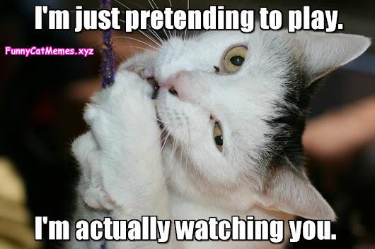 Funny Cat Meme Pictures : Kitty litter beach funny cat meme pmslweb