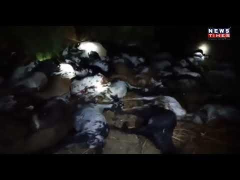 વાવના કુંડાળીયા ગામમાં વિજળીત્રાટકતાં 120 ઘેટાં-બકરાંનાં મોત