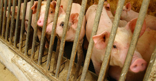 11 Reasons You Should Be Mad About Factory Farms... Even If You Aren't Vegan