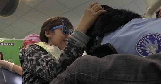 Therapy Dogs Bring Smiles To Kids With Autism, Even At The Dentist's Office