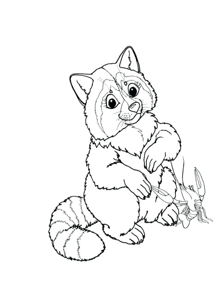 650 Cartoon Raccoon Coloring Pages  Images