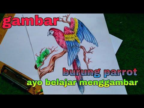 Cara Menggambar Burung Kakak Tua Parrot смотреть онлайн на Hahlife