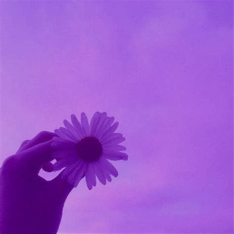 freetoedit flower purple aesthetic background bg