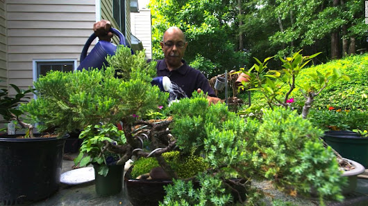 Gardening becomes healing with horticultural therapy - CNN
