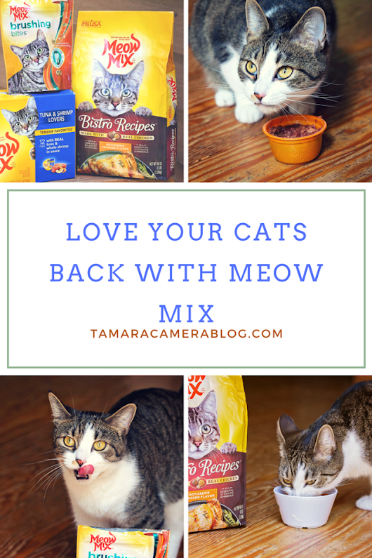 How to Love Your Cats Back With Meow Mix - Tamara Like Camera