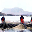The Swim Through Net Cleaning Process at Loch Duart
