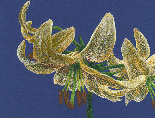 Golden Lilies for the Twitter Art Exhibit