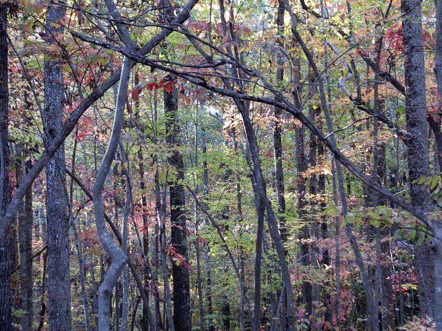 Autumn Colors Lake Crabtree NC 0469