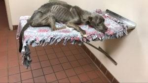 Hombre rescata a un perro en mal estado y cubierto de quemaduras
