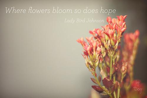 159/365 Where flowers bloom...