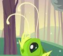 Pet Grasshopper
