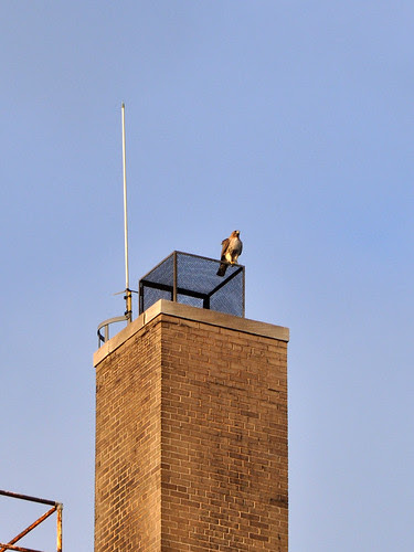 Norman on the Hospital Chimney