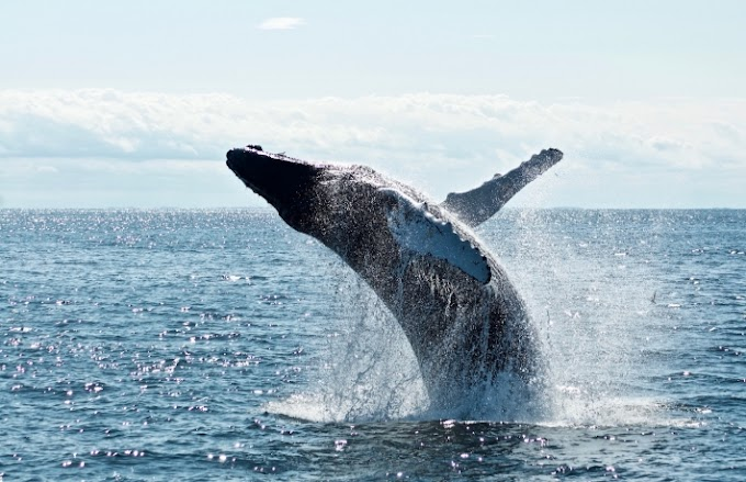 In the event that Whales Move the Market, UniWhales Is the Whale Whisperer