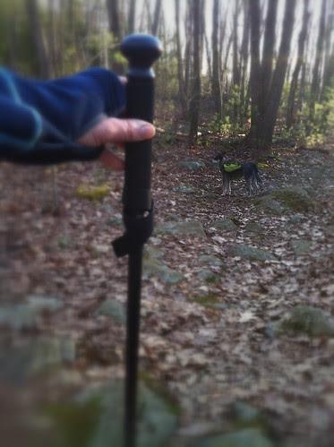 new walking stick