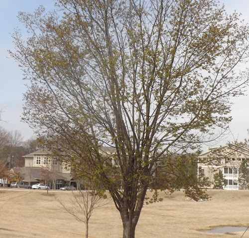 Champion Newspaper | DeKalb's most-trusted news source » Brookhaven City Council defers tree ordinance amendment