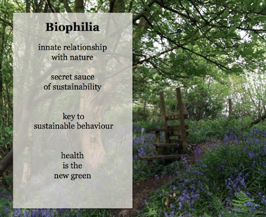 Biophilic Design & Rewilding- the secret sauce of sustainability?