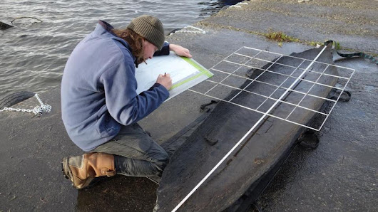 Log boat dating back 4,500 years found in Lough Corrib