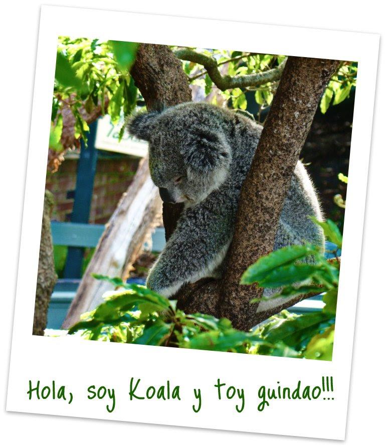 Hola, soy Koala y toy guindao!!!