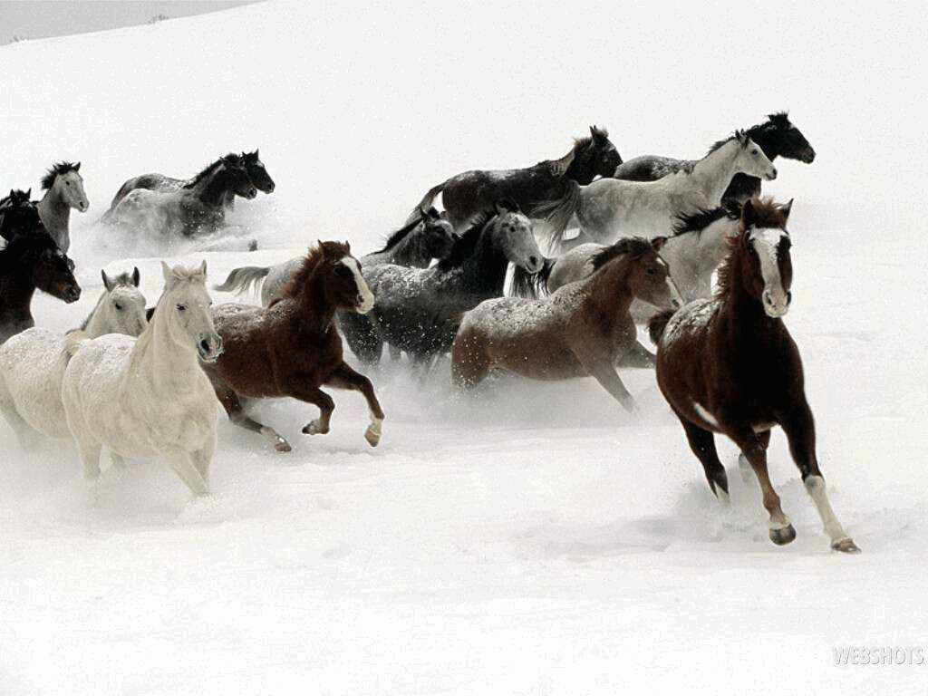 http://marcbarros.files.wordpress.com/2010/11/cavalos-na-neve1.jpg