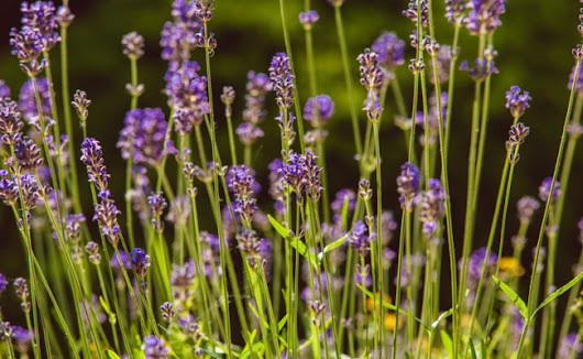4 Drought Friendly Medicinal Herbs For Your Garden | Care2 Healthy Living