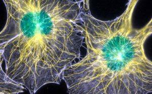 Cientistas descobrem bio-fótons no cérebro que podem sugerir que nossa consciência está diretamente ligada à luz!
