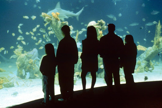 Vote - ABQ BioPark Aquarium - Albuquerque, N.M. - Best Aquarium Nominee:  2014 10Best Readers' Choice Travel Awards