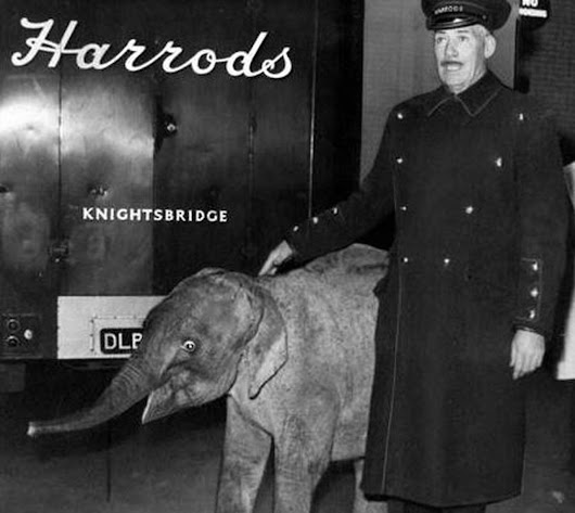 What do you know about Harrods Animal Kingdom? + new release!