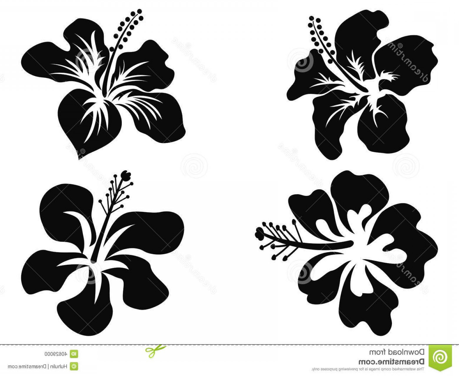 Hibiscus Vector At Getdrawingscom Free For Personal Use Hibiscus