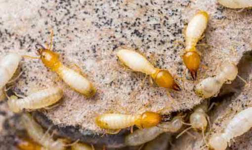 Signs of Termites In Your Home - Pest Control Sydney | Pest Control