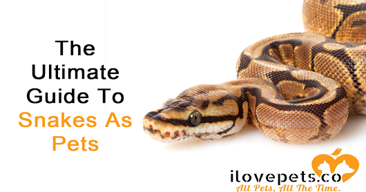The Ultimate Guide To Snakes As Pets | I Love Pets