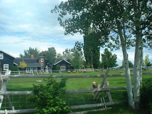 sheep house