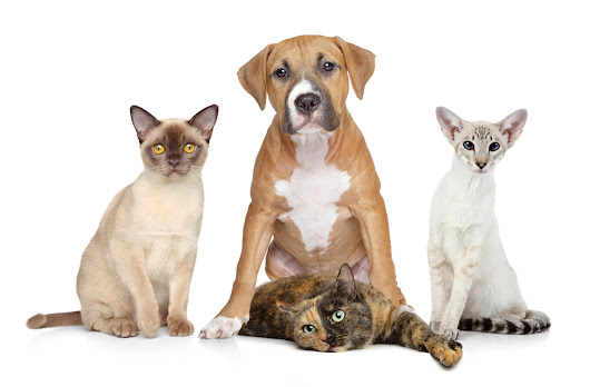 Remember Pets during Poison Prevention Week March 18-24 - Pet Poison Helpline